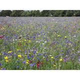 Amenity Flower Mixtures